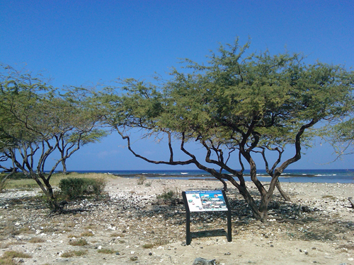 Puako coral reef